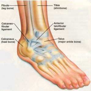 healthy life ankle pain causes and symptoms 605  : diagram of ankle - findchart.co