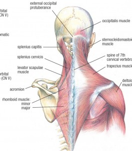 Healthy Life: Thoracic and Cervical ( Chest and Neck) Exercises ...